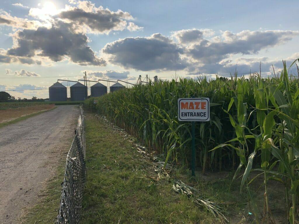 Cullipher Farm Corn Maze