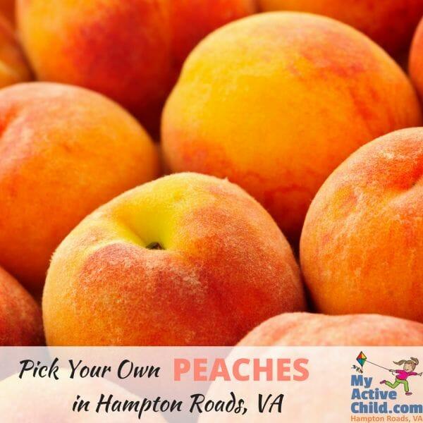 U-PICK Peaches in Hampton Roads Virginia